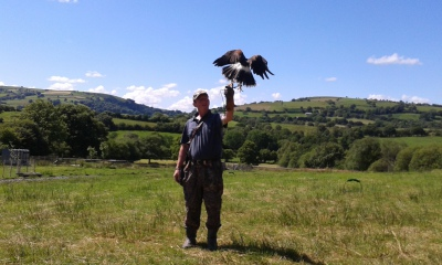 Falconry handling experience